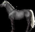 Holsteiner ##STADE## - mantello 71