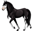 Paint horse ##STADE## - mantello 1000000160