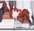 Paint horse ##STADE## - mantello 35
