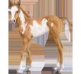 Paint horse ##STADE## - mantello 80
