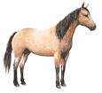 Quarter Horse ##STADE## - mantello 77