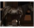 Mustang ##STADE## - mantello 26
