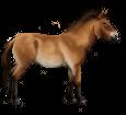 Cavallo di Przewalski ##STADE## - mantello 20