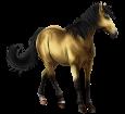 Cavallo delle Marchesi ##STADE## - mantello 20
