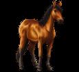 Cavallo del delta del Danubio ##STADE## - mantello 79