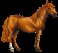 Cavallo cileno ##STADE## - mantello 77