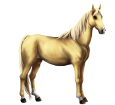 Pony Boero ##STADE## - mantello 1607