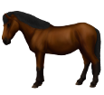 Pony tailandese ##STADE## - mantello 76