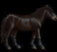 Pony del Bhutan ##STADE## - mantello 62